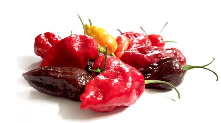 manipur hottest chili